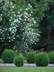 Gartenansichten, Dorothee Hartmann, p1000017