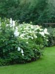 Gartenansichten, Dorothee Hartmann, p1000230