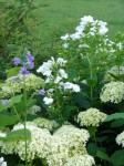 Gartenansichten, Dorothee Hartmann, p1000252