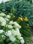 Gartenansichten, Dorothee Hartmann, p1000256